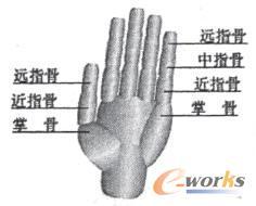 人手的结构图