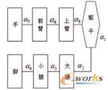 人体模型肢体层次结构